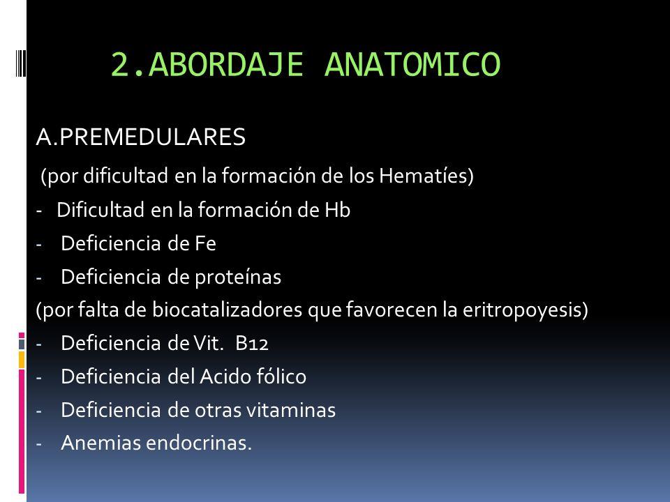 2.ABORDAJE ANATOMICO A.PREMEDULARES