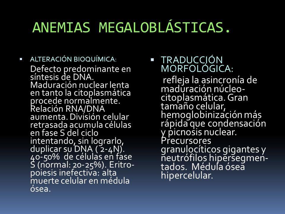 ANEMIAS MEGALOBLÁSTICAS.