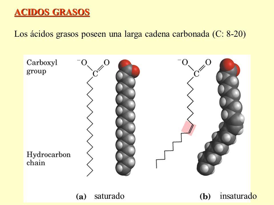 ACIDOS GRASOS Los ácidos grasos poseen una larga cadena carbonada (C: 8-20) saturado insaturado