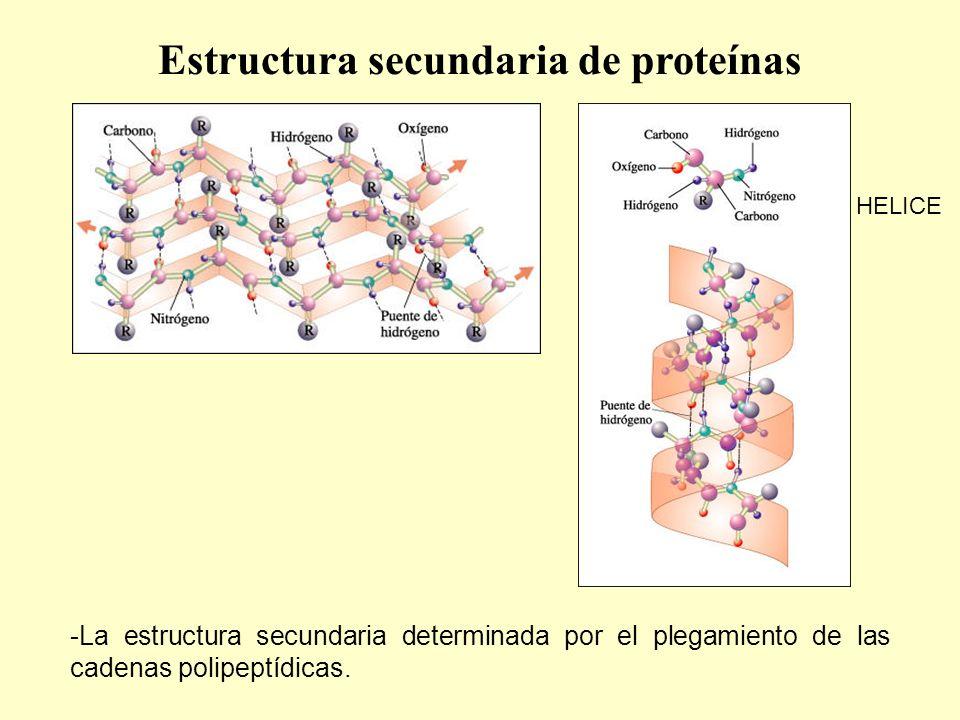 Estructura secundaria de proteínas
