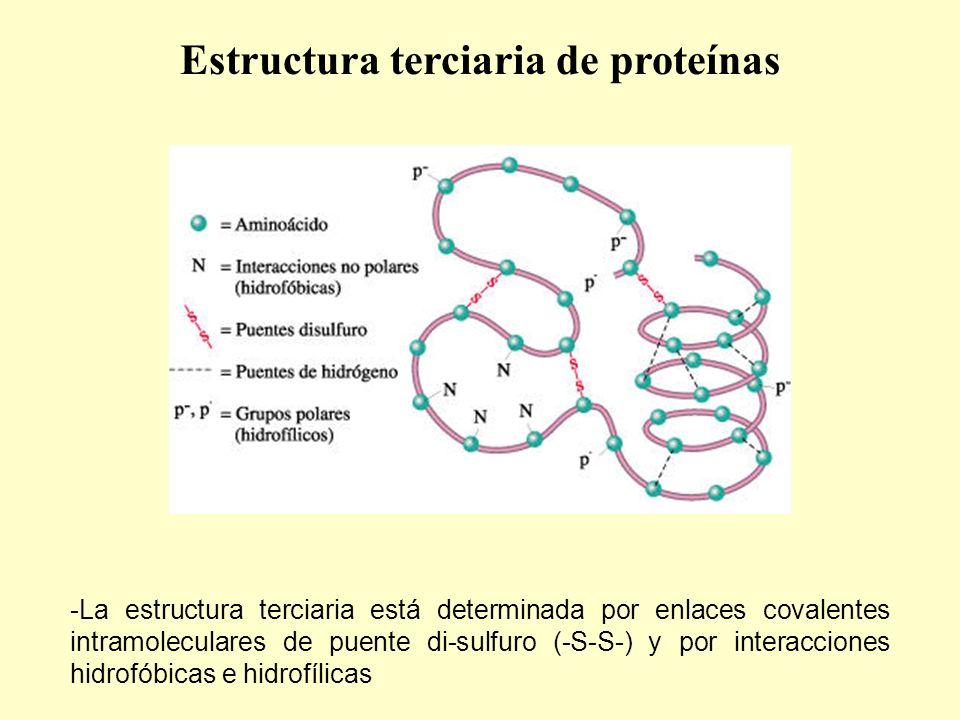 Estructura terciaria de proteínas