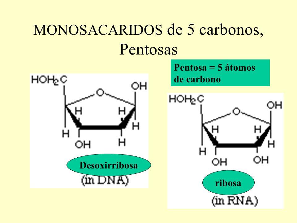 MONOSACARIDOS de 5 carbonos, Pentosas