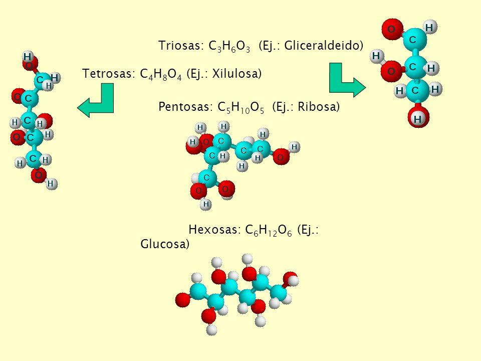 Triosas: C3H6O3 (Ej.: Gliceraldeido)