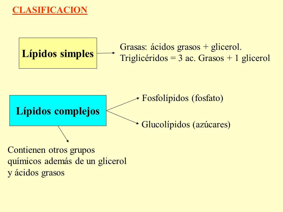 Lípidos simples Lípidos complejos