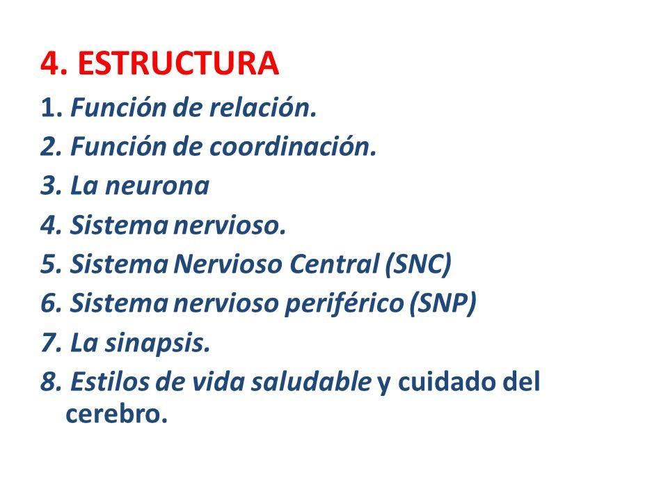 4. ESTRUCTURA 1. Función de relación. 2. Función de coordinación.