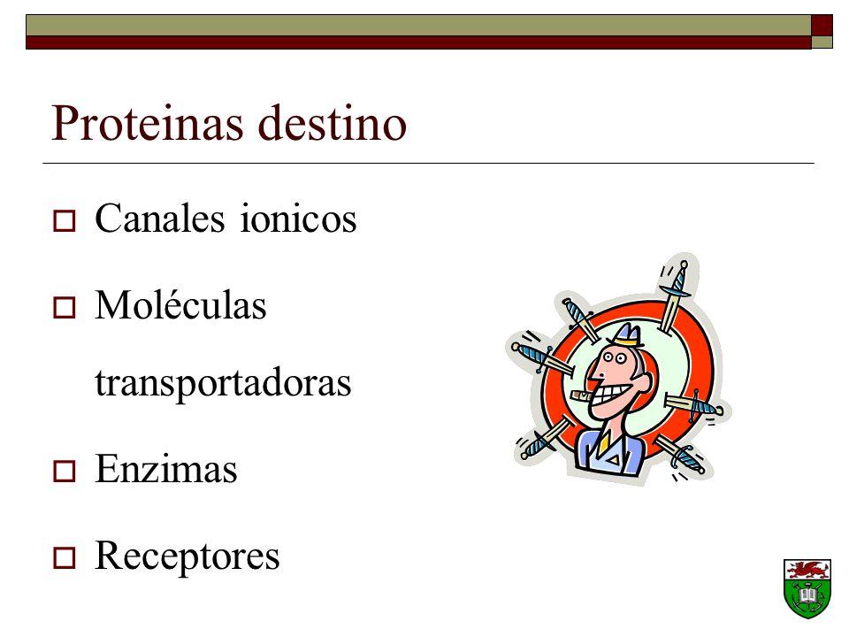 Proteinas destino Canales ionicos Moléculas transportadoras Enzimas