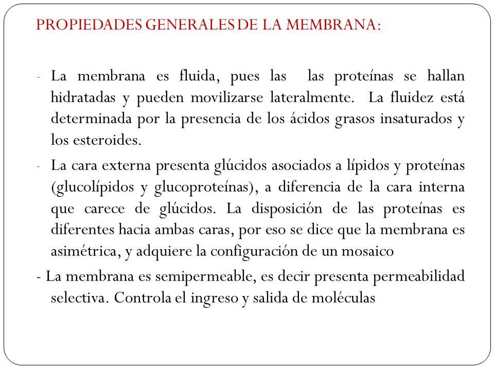 PROPIEDADES GENERALES DE LA MEMBRANA: