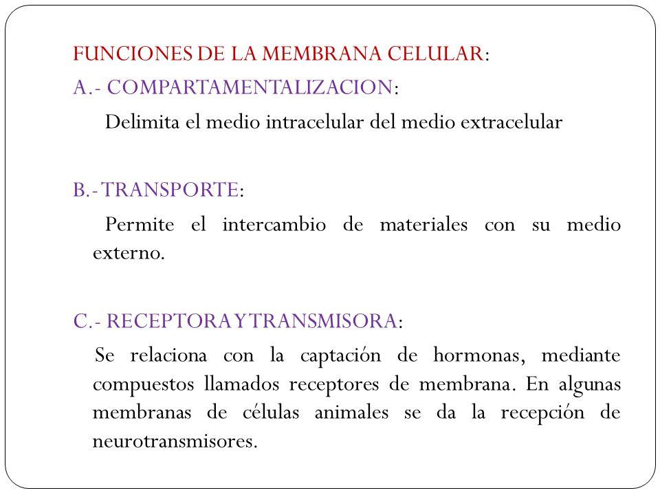 FUNCIONES DE LA MEMBRANA CELULAR: A