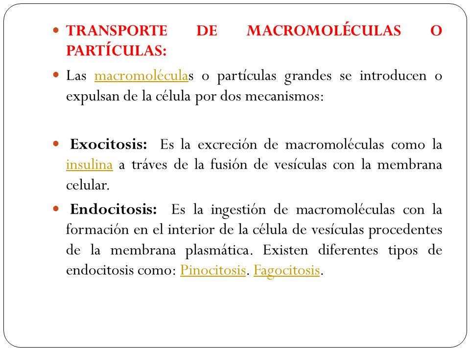TRANSPORTE DE MACROMOLÉCULAS O PARTÍCULAS: