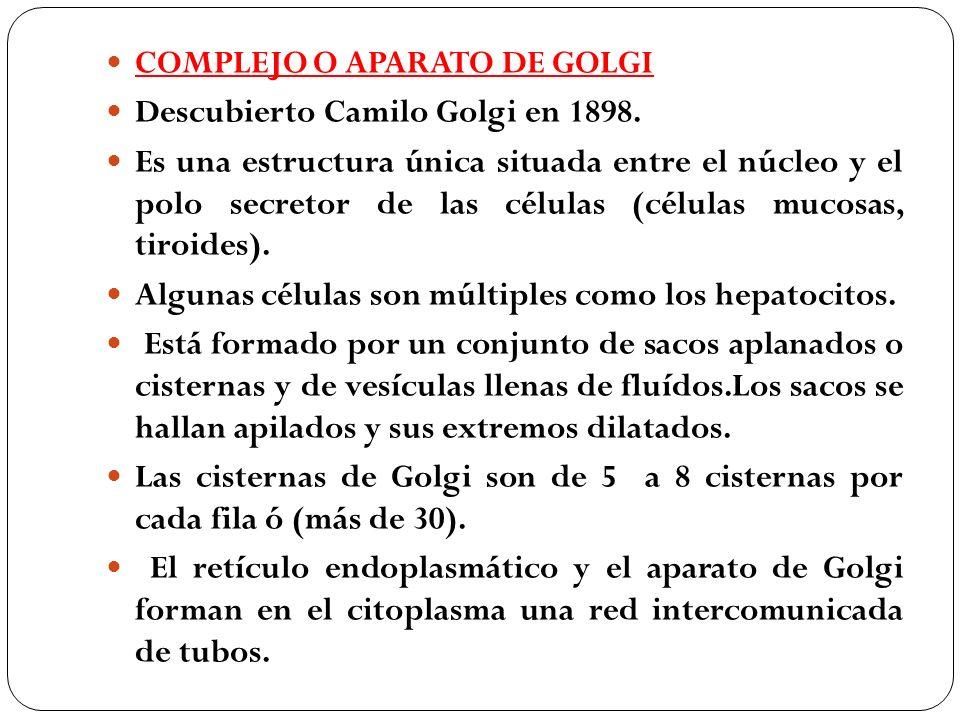COMPLEJO O APARATO DE GOLGI