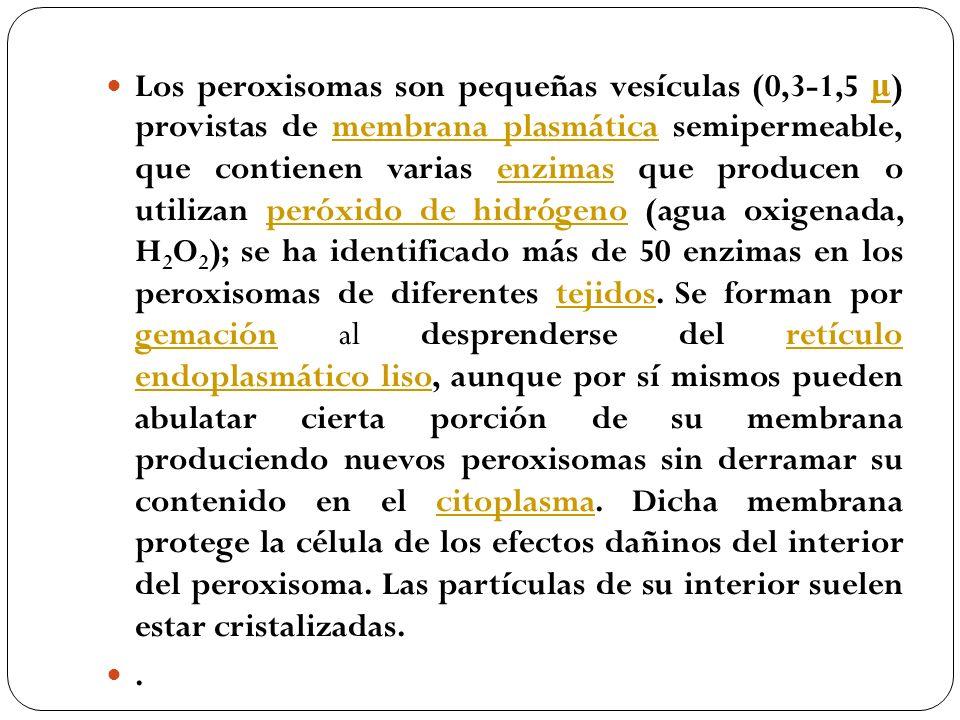 Los peroxisomas son pequeñas vesículas (0,3-1,5 μ) provistas de membrana plasmática semipermeable, que contienen varias enzimas que producen o utilizan peróxido de hidrógeno (agua oxigenada, H2O2); se ha identificado más de 50 enzimas en los peroxisomas de diferentes tejidos. Se forman por gemación al desprenderse del retículo endoplasmático liso, aunque por sí mismos pueden abulatar cierta porción de su membrana produciendo nuevos peroxisomas sin derramar su contenido en el citoplasma. Dicha membrana protege la célula de los efectos dañinos del interior del peroxisoma. Las partículas de su interior suelen estar cristalizadas.