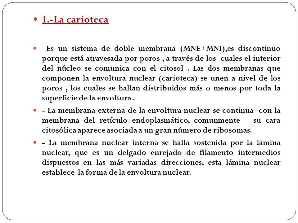1.-La carioteca