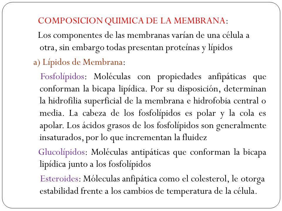COMPOSICION QUIMICA DE LA MEMBRANA: Los componentes de las membranas varían de una célula a otra, sin embargo todas presentan proteínas y lípidos a) Lípidos de Membrana: Fosfolípidos: Moléculas con propiedades anfipáticas que conforman la bicapa lipídica.