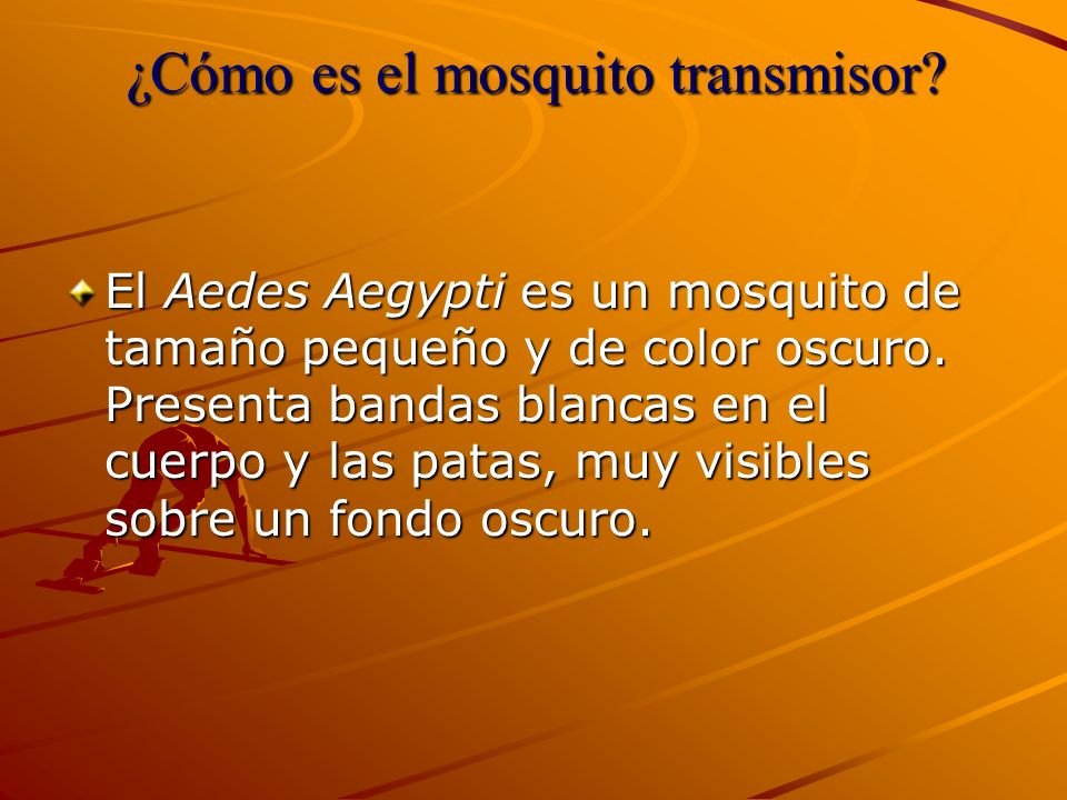 ¿Cómo es el mosquito transmisor