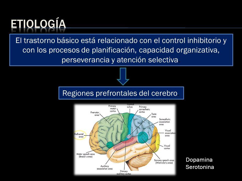 Regiones prefrontales del cerebro.