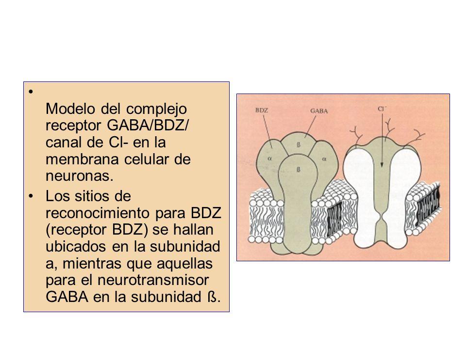Modelo del complejo receptor GABA/BDZ/ canal de Cl- en la membrana celular de neuronas.