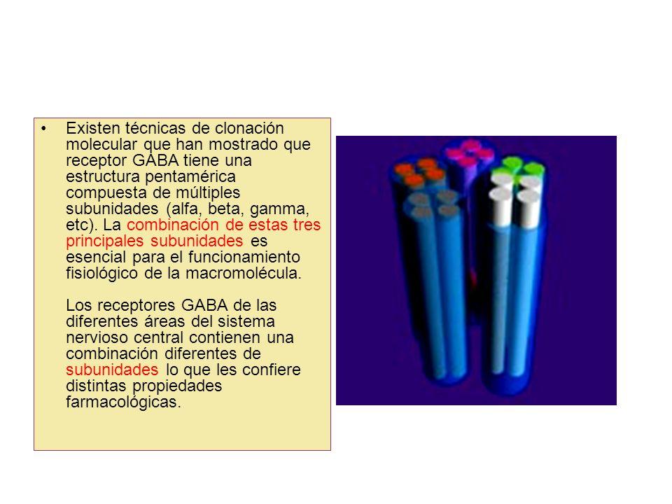 Existen técnicas de clonación molecular que han mostrado que receptor GABA tiene una estructura pentamérica compuesta de múltiples subunidades (alfa, beta, gamma, etc).