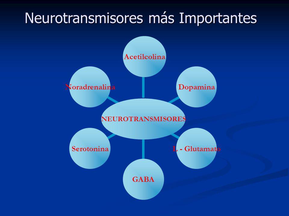 Neurotransmisores más Importantes