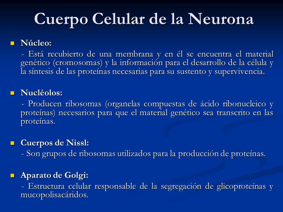 Cuerpo Celular de la Neurona