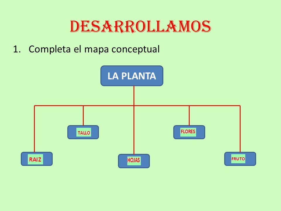 desarrollamos 1. Completa el mapa conceptual LA PLANTA