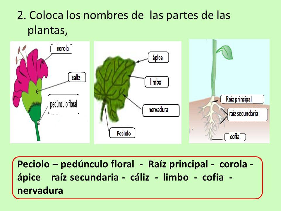 2. Coloca los nombres de las partes de las plantas,