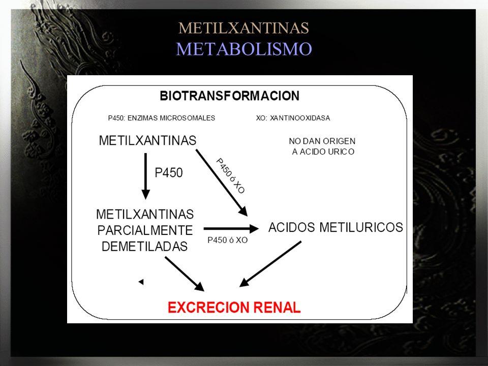 METILXANTINAS METABOLISMO