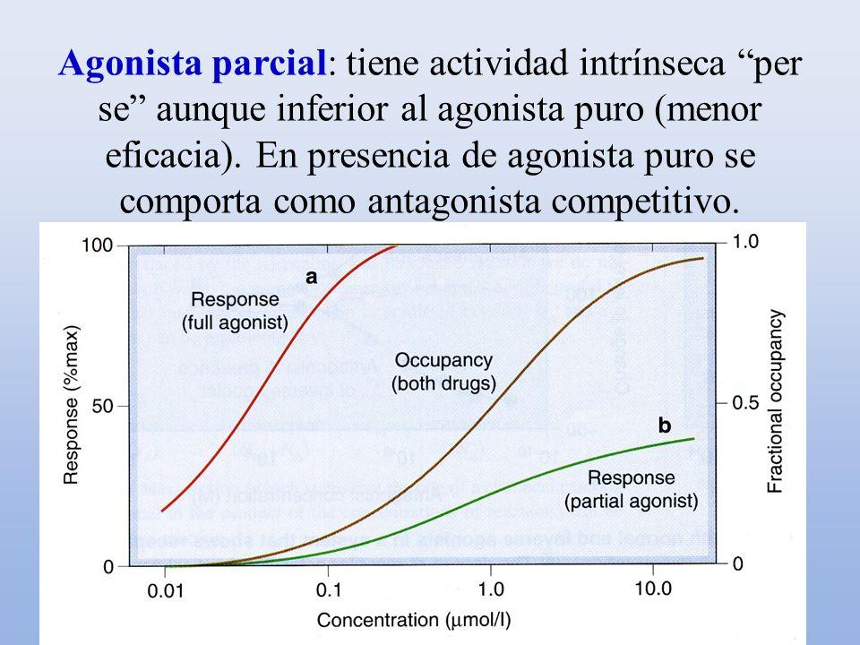 Agonista parcial: tiene actividad intrínseca per se aunque inferior al agonista puro (menor eficacia).