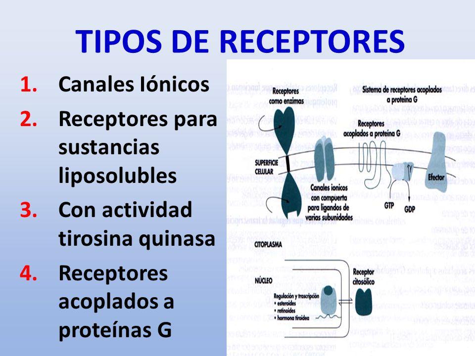 TIPOS DE RECEPTORES Canales Iónicos