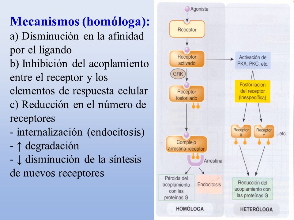 Mecanismos (homóloga):