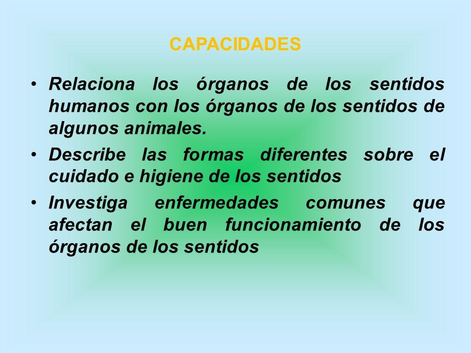 CAPACIDADES Relaciona los órganos de los sentidos humanos con los órganos de los sentidos de algunos animales.