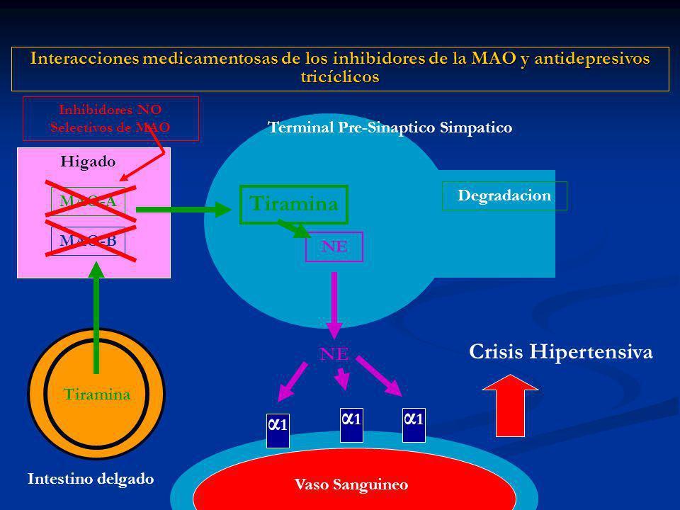 Inhibidores NO Selectivos de MAO