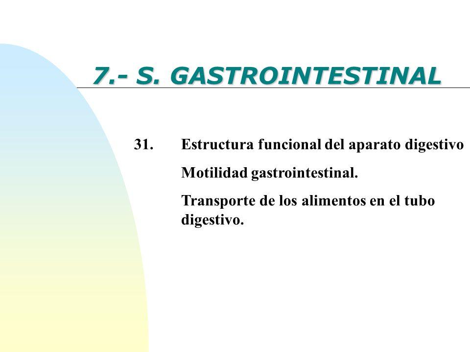 7.- S. GASTROINTESTINAL 31. Estructura funcional del aparato digestivo