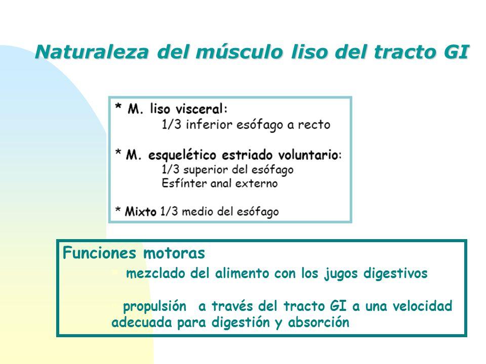 Naturaleza del músculo liso del tracto GI