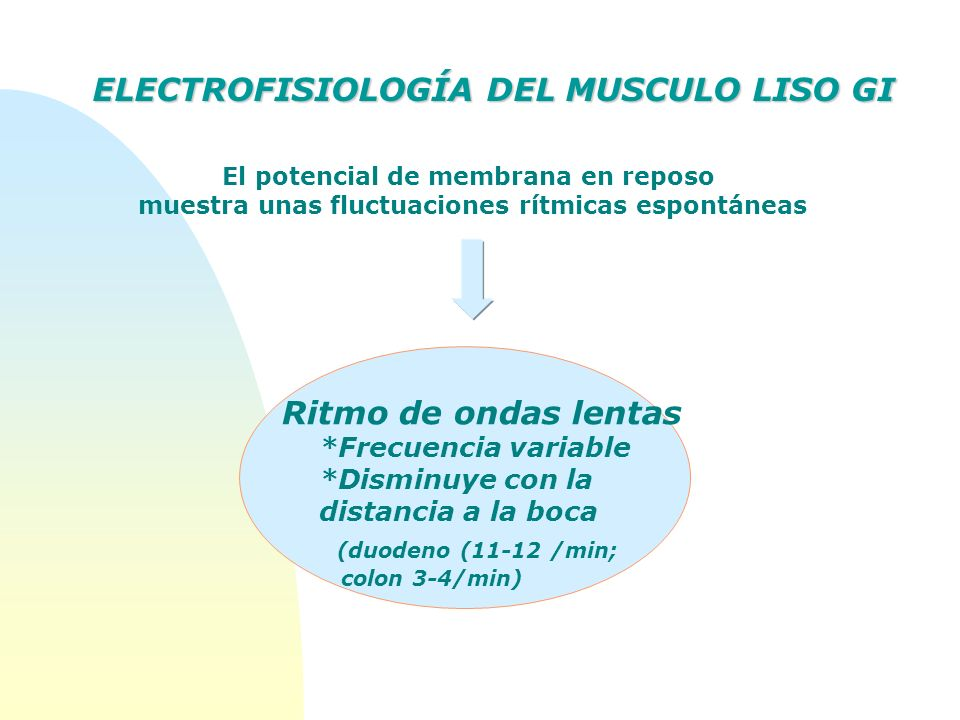 ELECTROFISIOLOGÍA DEL MUSCULO LISO GI