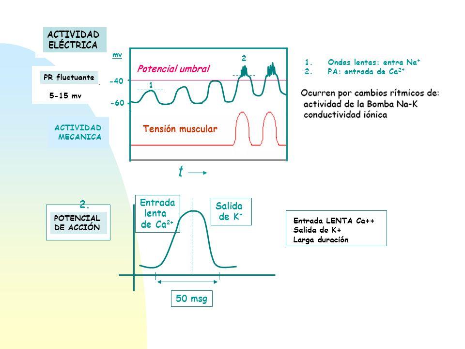 t 2. Potencial umbral Tensión muscular Entrada Salida lenta de K+
