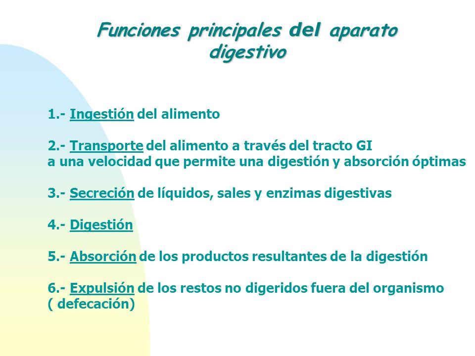 Funciones principales del aparato digestivo