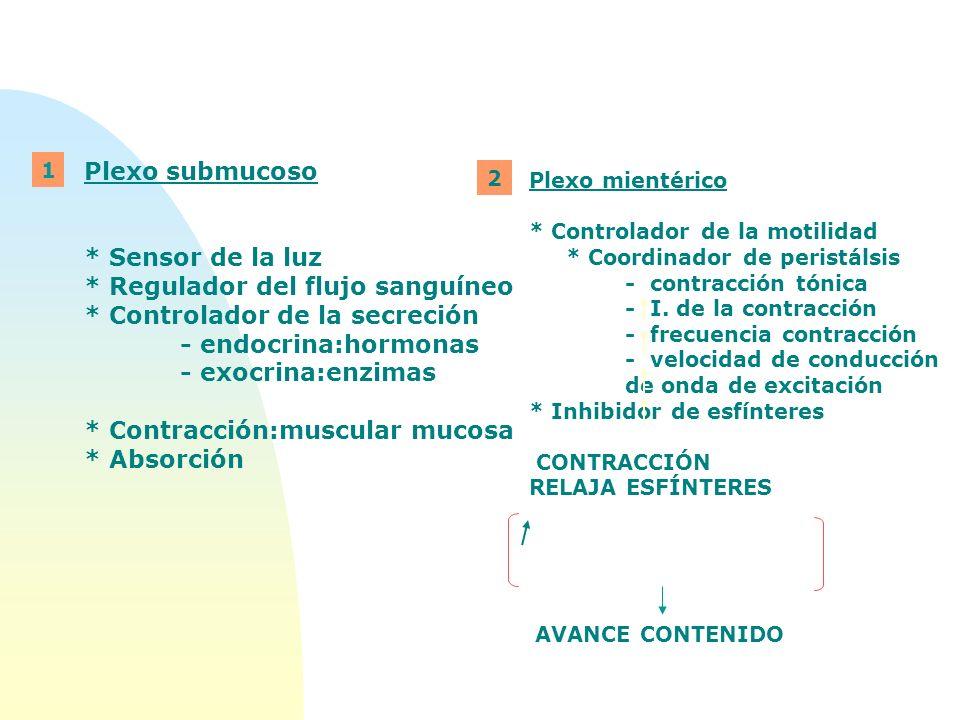 * Regulador del flujo sanguíneo * Controlador de la secreción