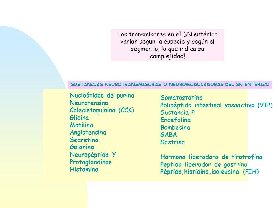 Colecistoquinina (CCK) Glicina Motilina Angiotensina Secretina