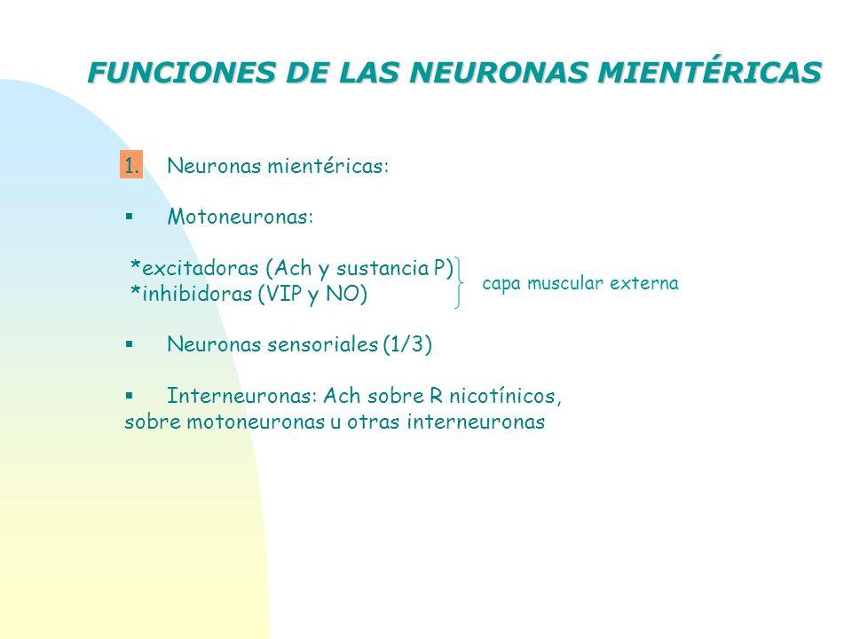 FUNCIONES DE LAS NEURONAS MIENTÉRICAS