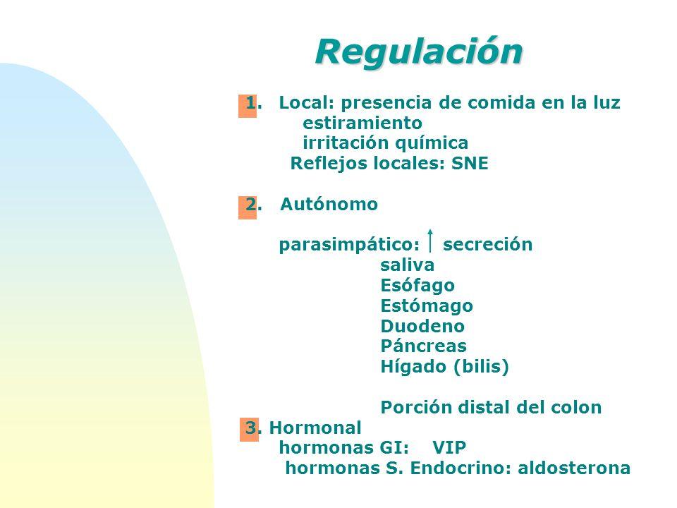 Regulación Local: presencia de comida en la luz estiramiento