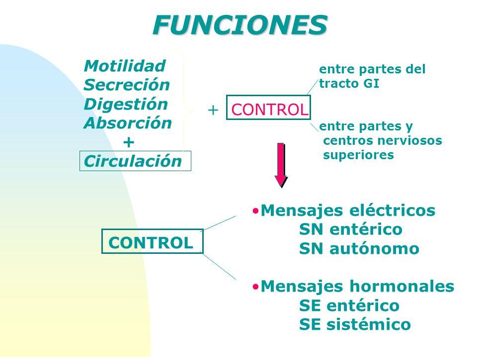 FUNCIONES Motilidad Secreción Digestión Absorción + + CONTROL