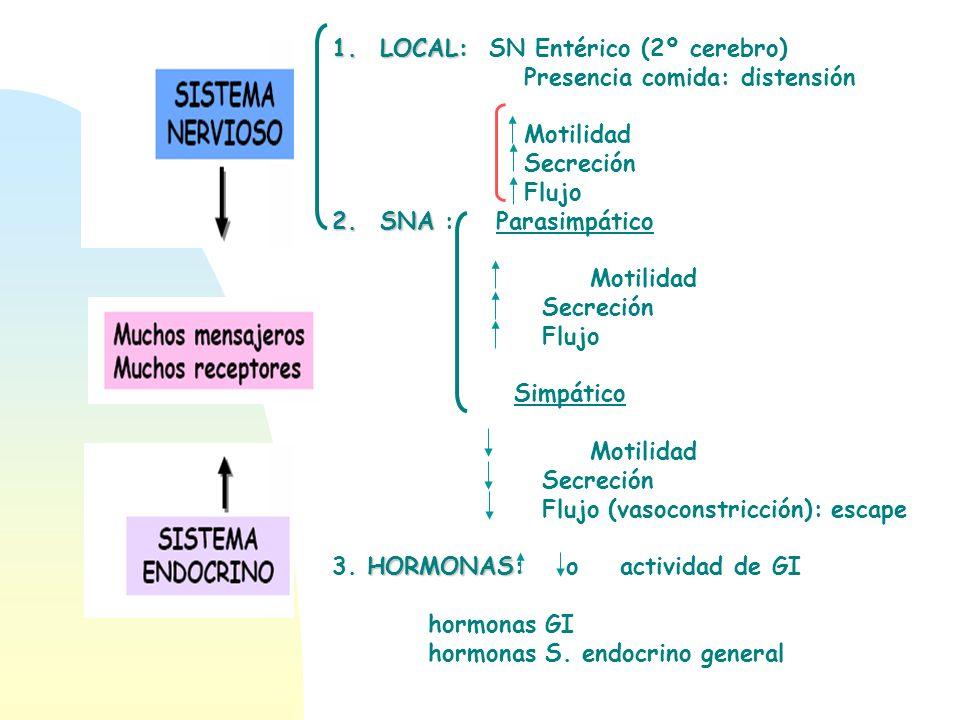 LOCAL: SN Entérico (2º cerebro)