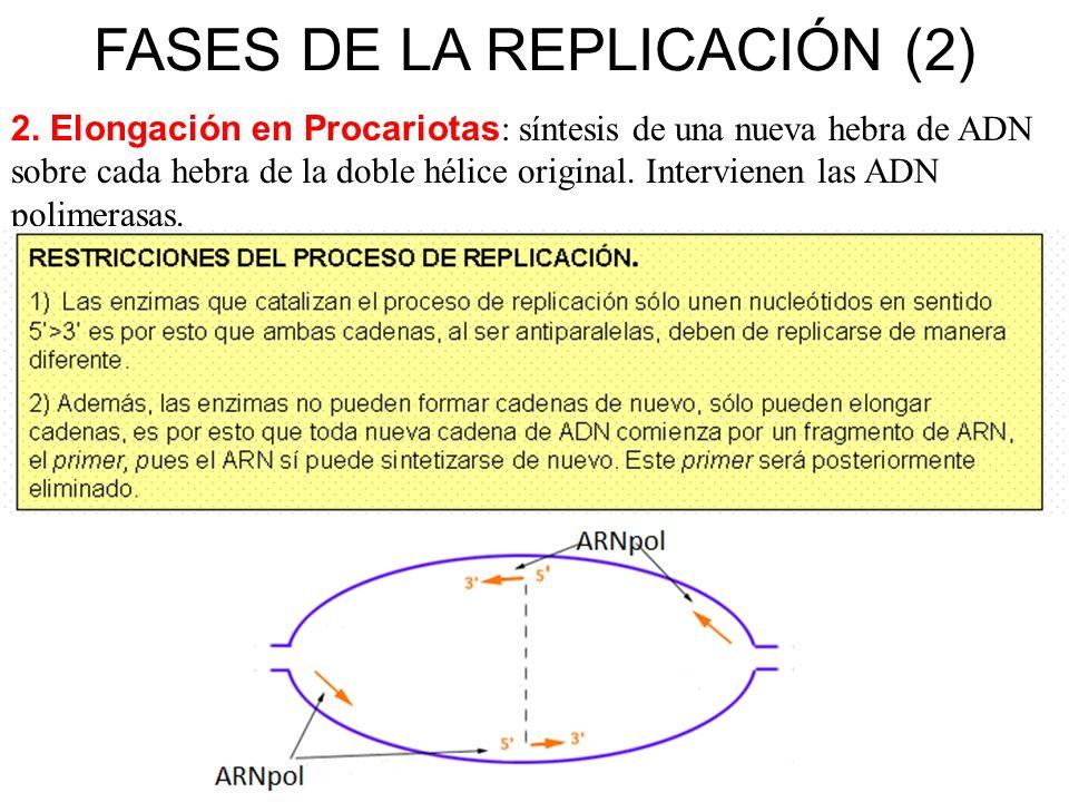 FASES DE LA REPLICACIÓN (2)