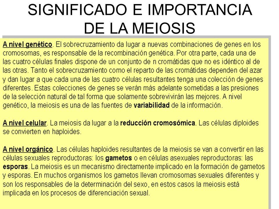 SIGNIFICADO E IMPORTANCIA DE LA MEIOSIS
