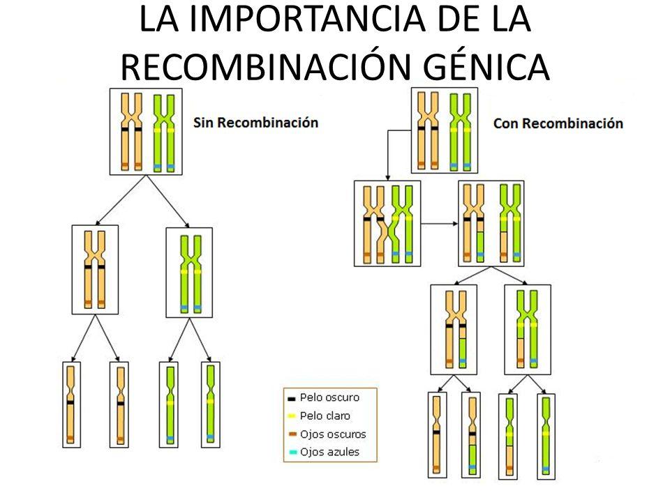LA IMPORTANCIA DE LA RECOMBINACIÓN GÉNICA