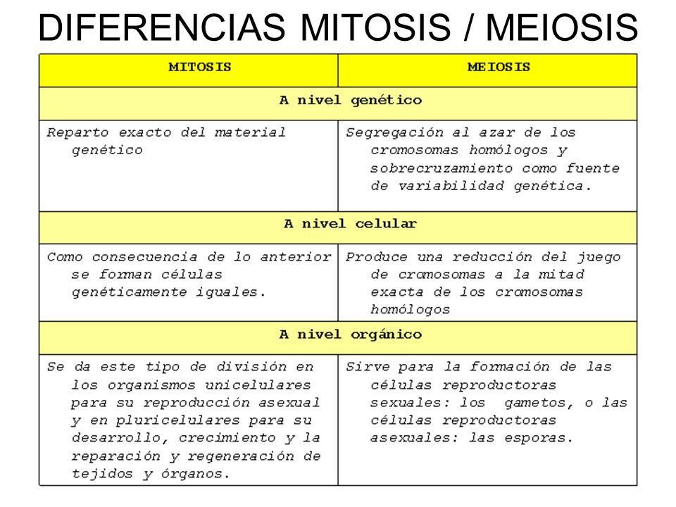 DIFERENCIAS MITOSIS / MEIOSIS