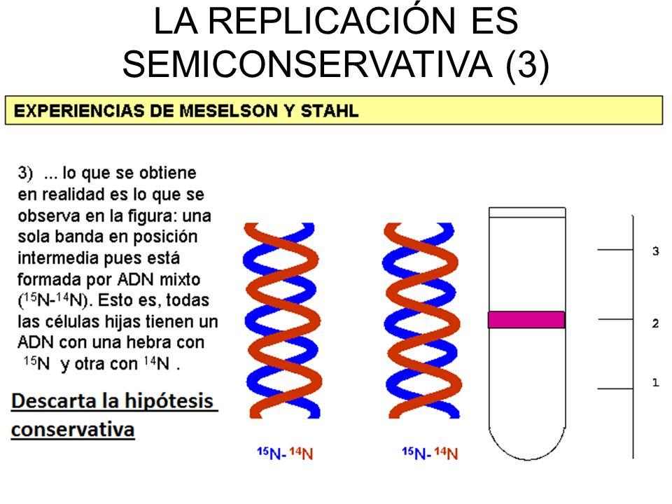 LA REPLICACIÓN ES SEMICONSERVATIVA (3)