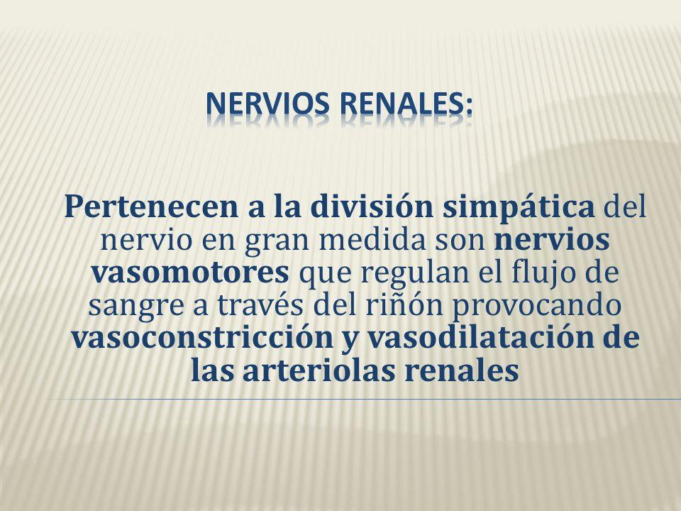 Nervios renales: