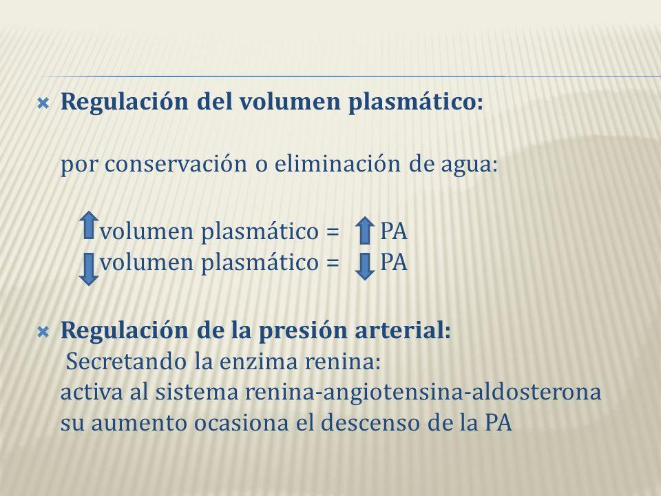 Regulación del volumen plasmático: por conservación o eliminación de agua: