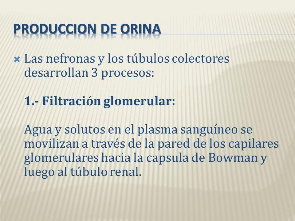 PRODUCCION DE ORINA